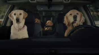 2020 Subaru Outback TV Spot, 'Dog Tested: No Pets Allowed' [T1] - Thumbnail 4