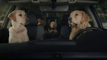 2020 Subaru Outback TV Spot, 'Dog Tested: No Pets Allowed' [T1] - Thumbnail 5