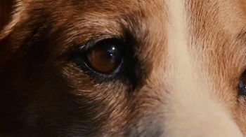 2020 Range Rover Evoque TV Spot, 'A Dog's Dream' Song by Dom James [T2] - Thumbnail 6