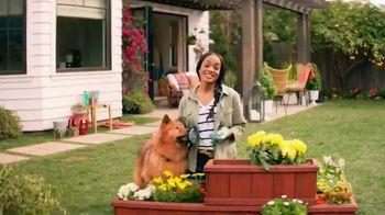 Zyrtec TV Spot, 'ABC: He Loves Me, He Loves Me Not' Featuring Rachel Lindsay - Thumbnail 1