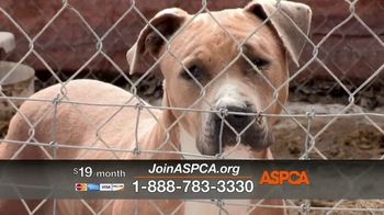 ASPCA TV Spot, 'Family' Song by Mina Tank - Thumbnail 7