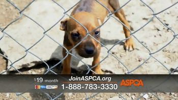 ASPCA TV Spot, 'Family' Song by Mina Tank - 602 commercial airings