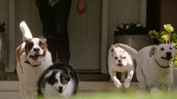 2019 Toyota Highlander TV Spot, \'Dear Pups\' [T2]