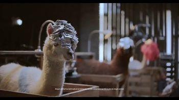 Samsung Galaxy Note10 TV Spot, 'Alpaca' canción de Incredible Bongo Band [Spanish]