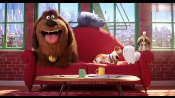 Progressive TV Spot, 'Secret Life of Pets 2: Protect Your Pets' - Thumbnail 1