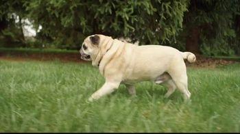 Freshpet Select TV Spot, 'Rudy the Picky Pug' - Thumbnail 8