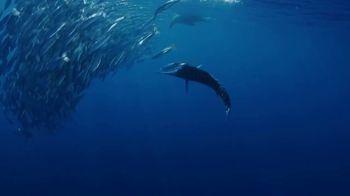 Waypoint TV TV Spot, 'The Best Fishing' - Thumbnail 1