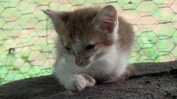 ASPCA TV Spot, 'Overwhelming'