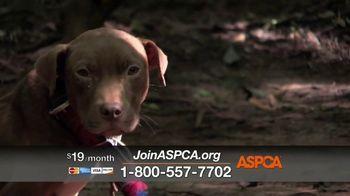 ASPCA TV Spot, 'Overwhelming' - Thumbnail 5