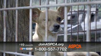 ASPCA TV Spot, 'Overwhelming' - Thumbnail 8