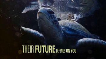 World Wildlife Fund TV Spot, 'Sea Turtles'