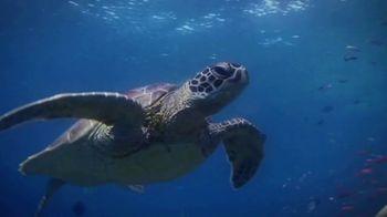 World Wildlife Fund TV Spot, 'Sea Turtles' - Thumbnail 1