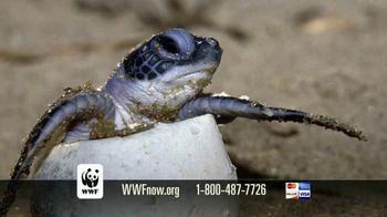 World Wildlife Fund TV Spot, 'Sea Turtles' - Thumbnail 10