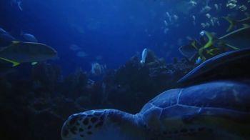 World Wildlife Fund TV Spot, 'Sea Turtles' - Thumbnail 2