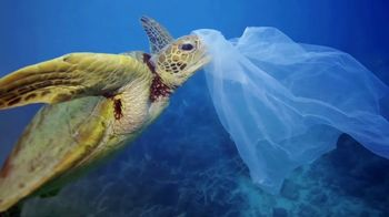 World Wildlife Fund TV Spot, 'Sea Turtles' - Thumbnail 4