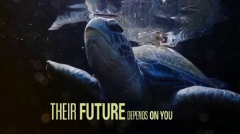 World Wildlife Fund TV Spot, 'Sea Turtles'