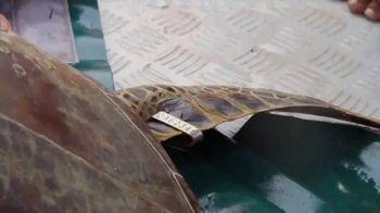 World Wildlife Fund TV Spot, 'Sea Turtles' - Thumbnail 6