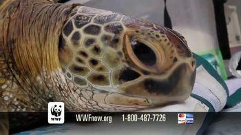 World Wildlife Fund TV Spot, 'Sea Turtles' - Thumbnail 7