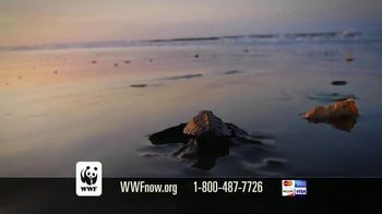 World Wildlife Fund TV Spot, 'Sea Turtles' - Thumbnail 8
