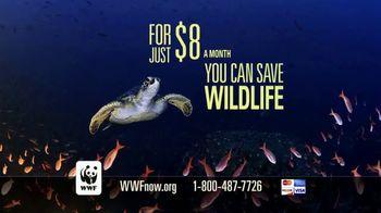 World Wildlife Fund TV Spot, 'Sea Turtles' - Thumbnail 9