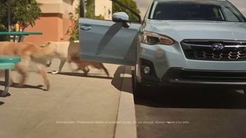 Subaru Crosstrek TV Spot, 'Dog Tested: Lunch Stop' [T1] - Thumbnail 2