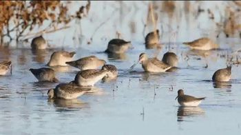 Ducks Unlimited TV Spot, 'Freshwater Wetlands' - 3 commercial airings