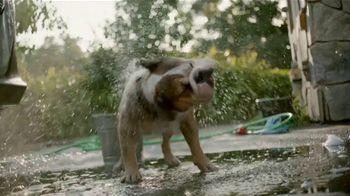 Subaru Ascent TV Spot, 'Dog Tested: Car Wash' [T1] - Thumbnail 6