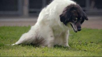 Honda TV Spot, 'Random Acts of Helpfulness: Dog Wheels' [T2] - Thumbnail 1