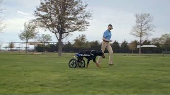 Honda TV Spot, 'Random Acts of Helpfulness: Dog Wheels' [T2] - Thumbnail 5