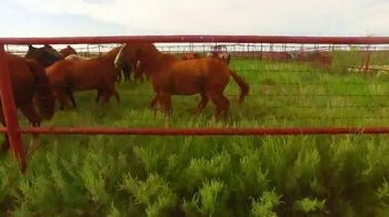 6666 Ranch TV Spot, '2019 Stallion Roster' - Thumbnail 2