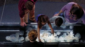 Ripley's Aquarium of the Smokies TV Spot, 'This Place Was Awesome' - 24 commercial airings
