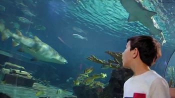 Ripley's Aquarium of the Smokies TV Spot, 'This Place Was Awesome' - Thumbnail 8