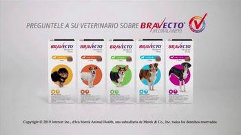 Bravecto TV Spot, '12 semanas de protección' con Elva Saray [Spanish] - Thumbnail 10