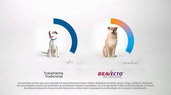 Bravecto TV Spot, '12 semanas de protección' con Elva Saray [Spanish] - Thumbnail 5