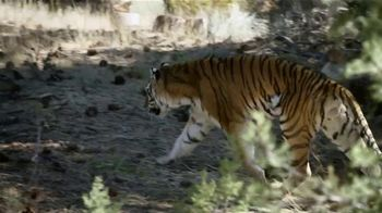 Law Tigers TV Spot, 'We Travel the Same Road' - Thumbnail 4