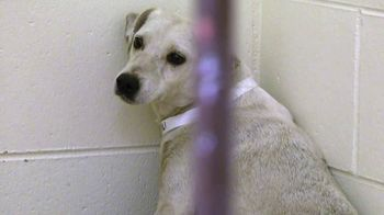 ASPCA TV Spot, 'Unable to Speak' - Thumbnail 2