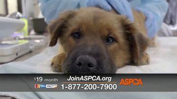 ASPCA TV Spot, 'Unable to Speak' - Thumbnail 5