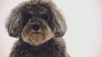 The Shelter Pet Project TV Spot, 'Meet Jake'