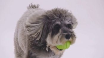 The Shelter Pet Project TV Spot, 'Meet Jake' - Thumbnail 5