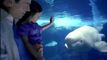 SeaWorld TV Spot, 'Can't Miss Summer' - Thumbnail 7