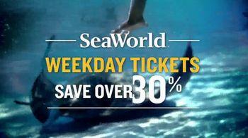 SeaWorld TV Spot, 'Can't Miss Summer' - Thumbnail 9