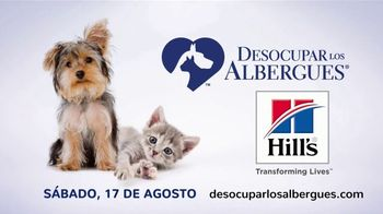 Clear the Shelters TV Spot, 'Telemundo: desocupar los albergues' [Spanish] - Thumbnail 5