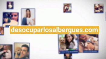Clear the Shelters TV Spot, 'Telemundo: desocupar los albergues' [Spanish] - Thumbnail 4