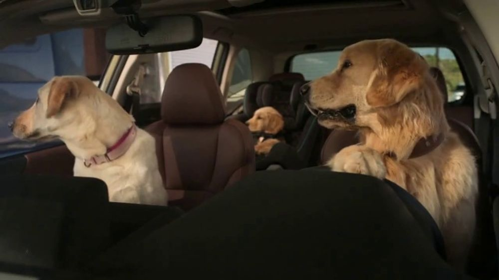 Subaru Forester TV Commercial, 'Dog Tested: National Make