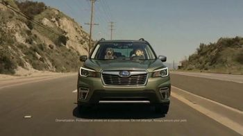 Subaru Forester TV Spot, 'Dog Tested: National Make a Dog's Day' [T1] - Thumbnail 1