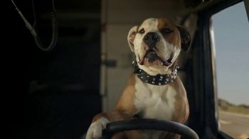 Subaru Forester TV Spot, 'Dog Tested: National Make a Dog's Day' [T1] - Thumbnail 4