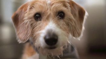 The Farmer's Dog TV Spot, 'Dogs Love to Eat' - Thumbnail 4