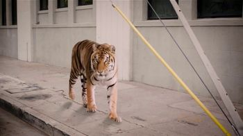 Law Tigers TV Spot. 'Go with the Flow'