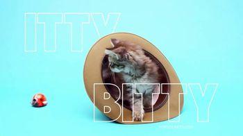 PopSockets PopMinis TV Spot, 'Itty Bitty'
