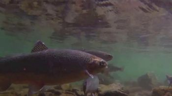 National Forest Foundation TV Spot, 'Dig Deeper' - Thumbnail 3